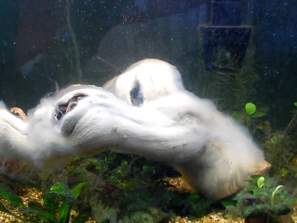 white slime on driftwood